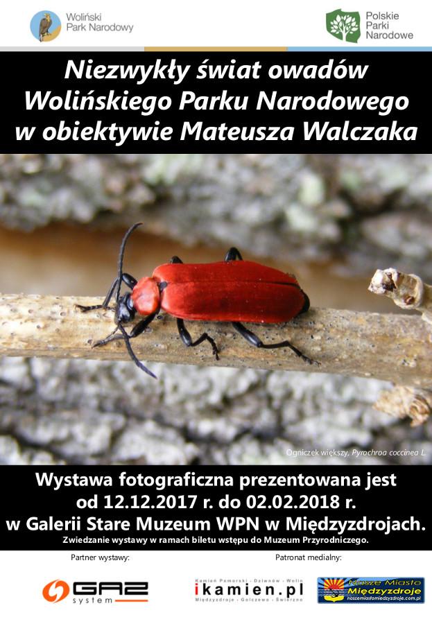 Niezwykły świat owadów Wolińskiego Parku Narodowego w obiektywie Mateusza Walczaka